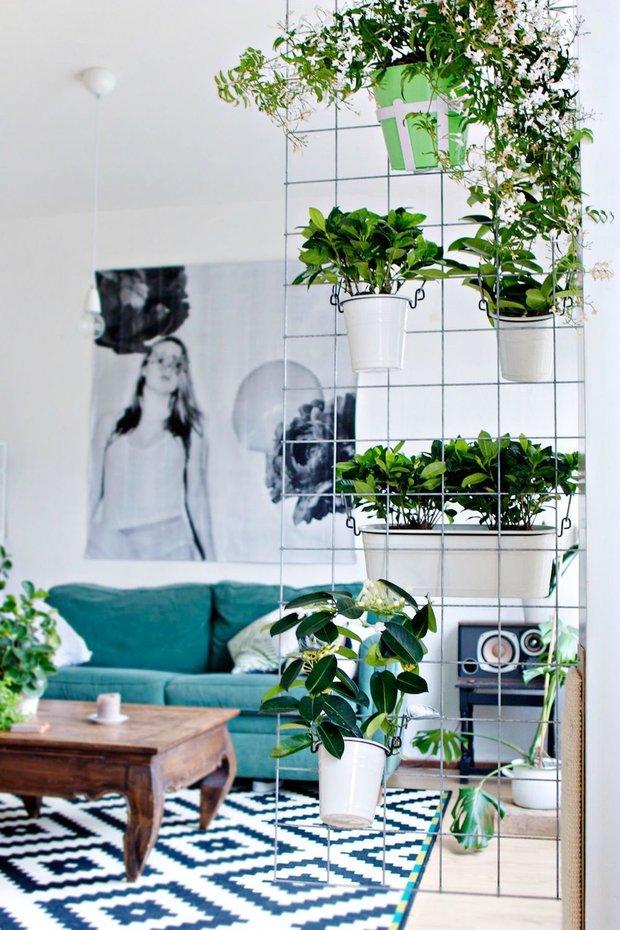 Фотография: Прихожая в стиле Современный, Советы, растения в интерьере – фото на INMYROOM