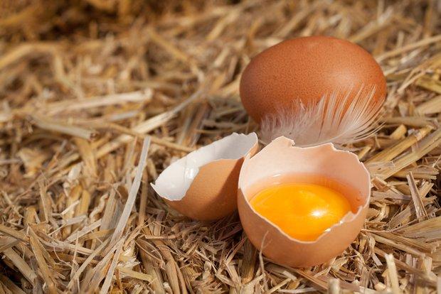 Фотография:  в стиле , Обзоры, Здоровье, Яйца – фото на INMYROOM