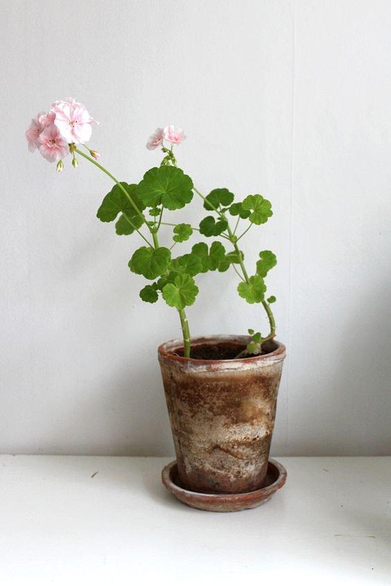 Фотография: Ванная в стиле Скандинавский, Гид, растения в интерьере – фото на InMyRoom.ru