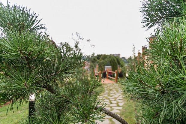 Фотография: Ландшафт в стиле Современный, Стиль жизни, Дачный ответ – фото на INMYROOM