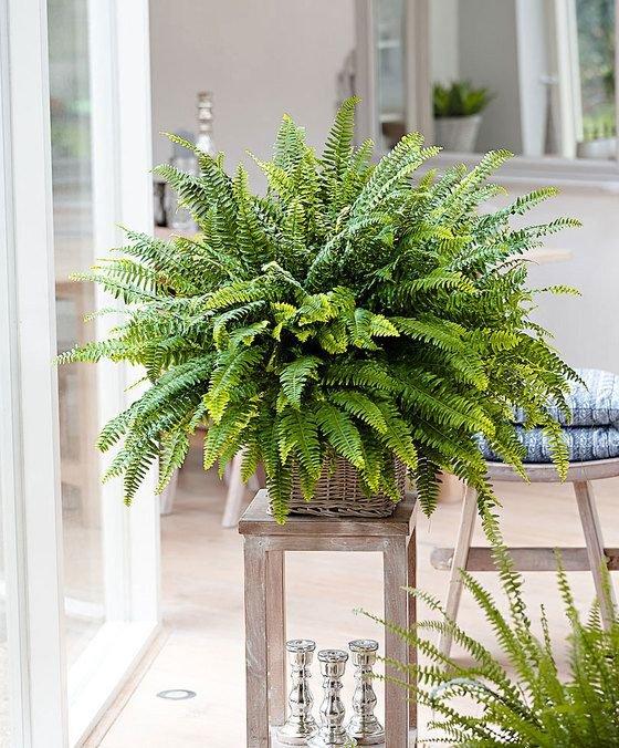 Фотография: Ванная в стиле Скандинавский, Гид, растения в интерьере – фото на INMYROOM