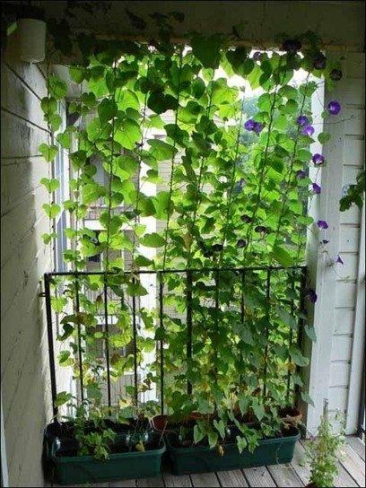 Фотография: Спальня в стиле Современный, Балкон, Флористика, Стиль жизни – фото на INMYROOM