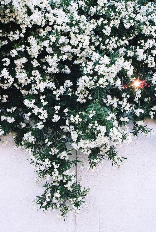 Фотография: Кухня и столовая в стиле Современный, Флористика, Советы, Цветы, кустарники – фото на INMYROOM