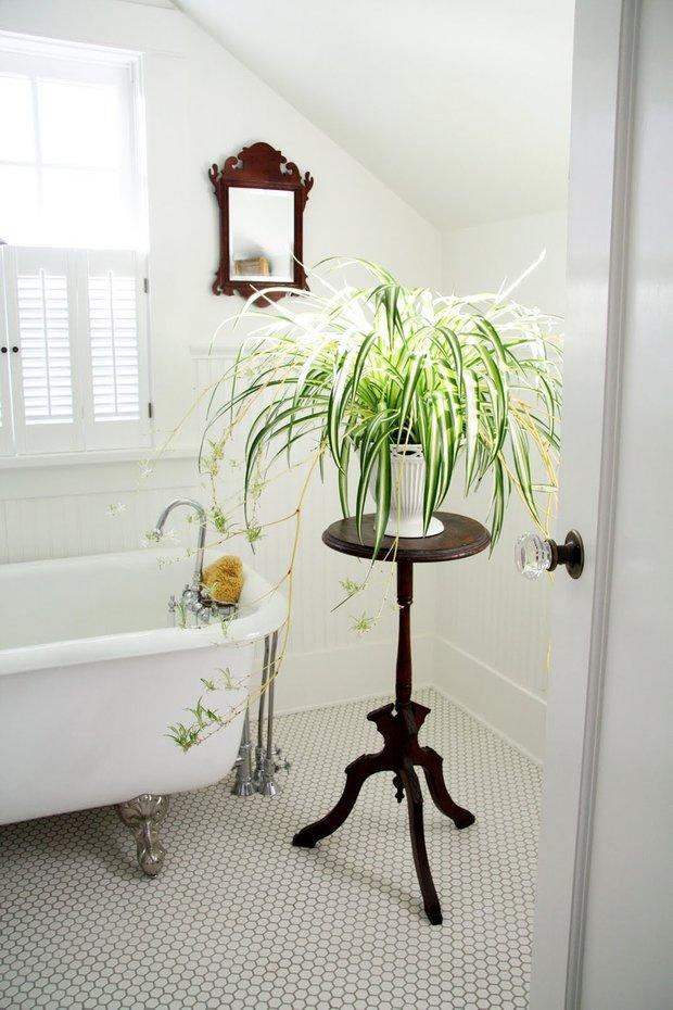 Фотография:  в стиле , Ванная, Флористика, Советы, комнатные растения для ванной комнаты – фото на INMYROOM