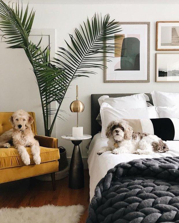 Фотография: Спальня в стиле Современный, Советы, животные дома, Thomas, пылесос для животных, как избавиться от грязи и шерсти, как убрать квартиру от шерсти – фото на INMYROOM