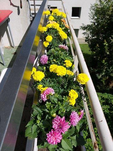Фотография: Декор в стиле Эко, Балкон, Ландшафт, Терраса, Советы, Мария Шумская, Есения Семипядная, элегантный городской балкон, винтажные вещи на балконе, восточный декор для балкона, балкон в средиземноморском стиле, ландшафтный дизайн для балкона, горизонтальное озеленение, хвойные растения на балконе – фото на INMYROOM