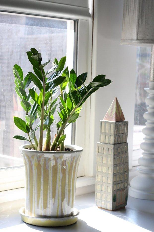 Фотография: Флористика в стиле Современный, Декор интерьера, Советы, растения для ленивых, растения для интерьера – фото на INMYROOM