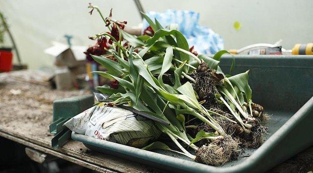 Фотография: Спальня в стиле Минимализм, Советы, Сад, работы в саду – фото на INMYROOM