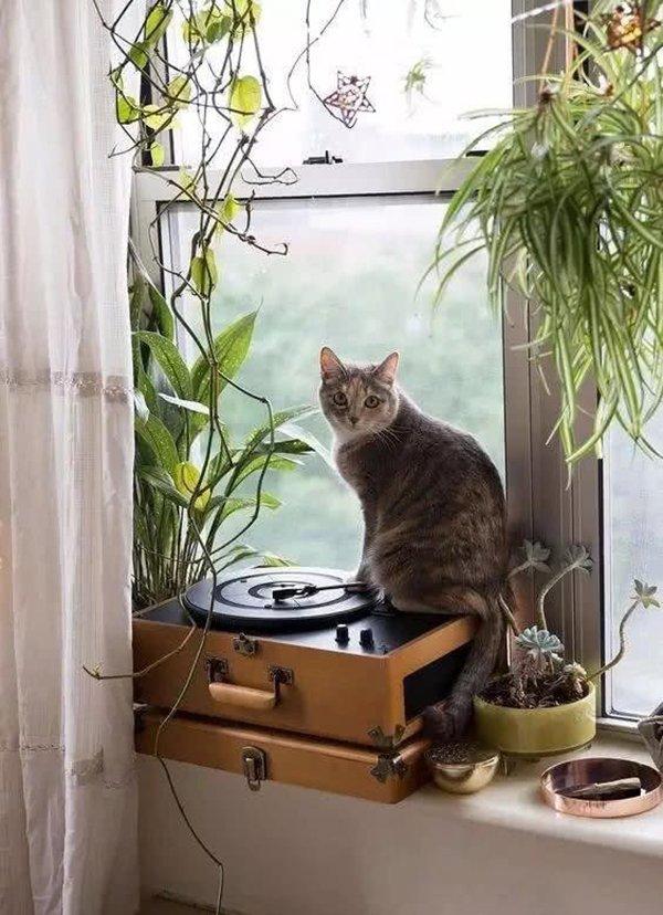 Фотография:  в стиле , Советы, уборка, как помыть окна – фото на INMYROOM