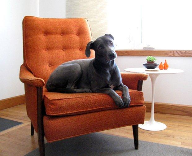 Фотография: Мебель и свет в стиле , Декор интерьера, Декор дома, Кресло – фото на INMYROOM