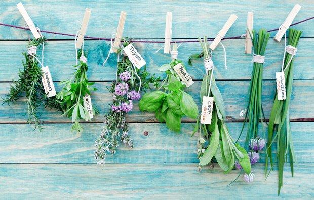 Фотография:  в стиле , Обзоры, Травы, Специи и приправы – фото на INMYROOM