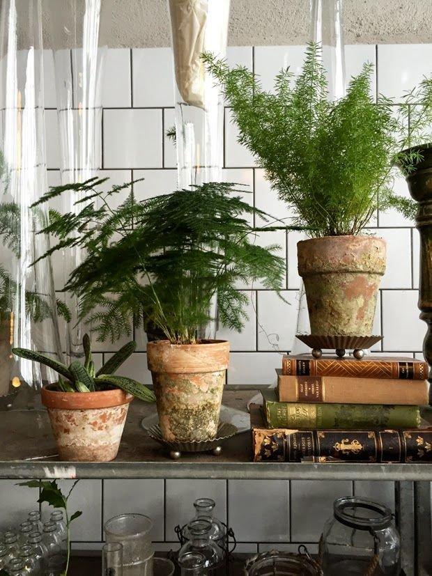 Фотография:  в стиле , Декор интерьера, Декор, Прочее, Советы, Зимний сад, растения в интерьере, цветы для малогабаритки, декор интерьера цветами, растения в горшках в интерьере – фото на INMYROOM