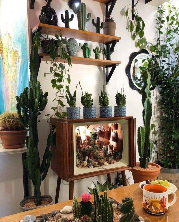 Фотография:  в стиле , Советы, растения в интерьере – фото на INMYROOM