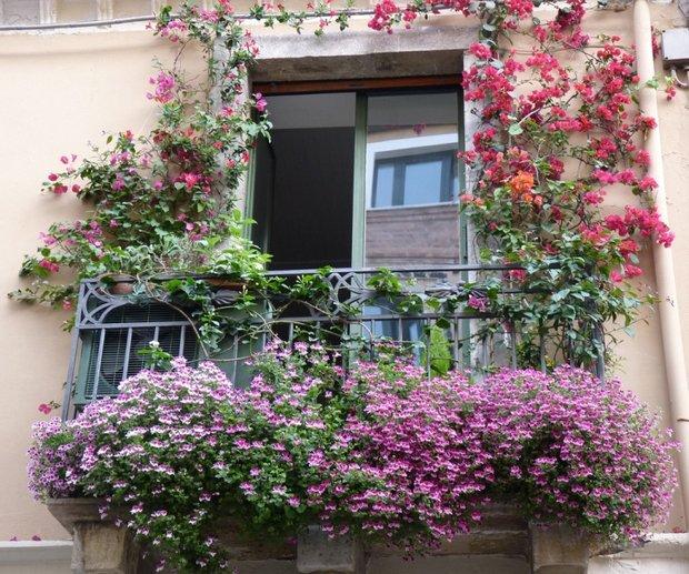 Фотография:  в стиле , Балкон, Ландшафт, Терраса, Советы, Мария Шумская, огород на балконе, растения для южного балкона, растения для затененного балкона, растения на высоких этажах, как выбрать растения для балкона – фото на INMYROOM