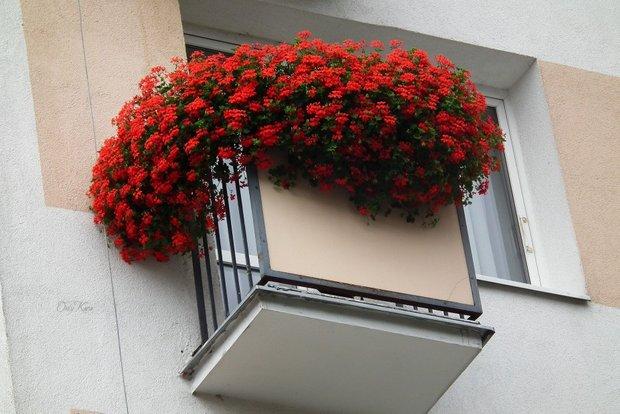Фотография: Балкон, Терраса в стиле Современный, Декор интерьера, DIY, Дом, Флористика, Стиль жизни, Цветы, специальная тема: балконы – фото на INMYROOM
