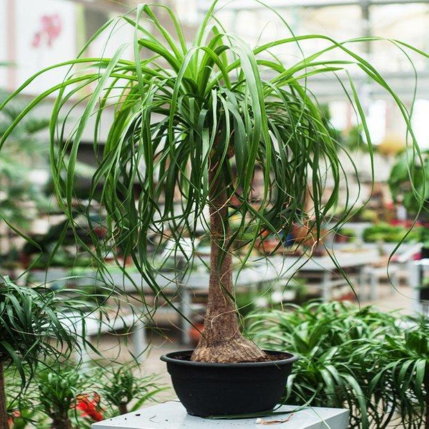 Фотография: Флористика в стиле Эко, Декор интерьера, Советы, растения для ленивых, растения для интерьера – фото на INMYROOM