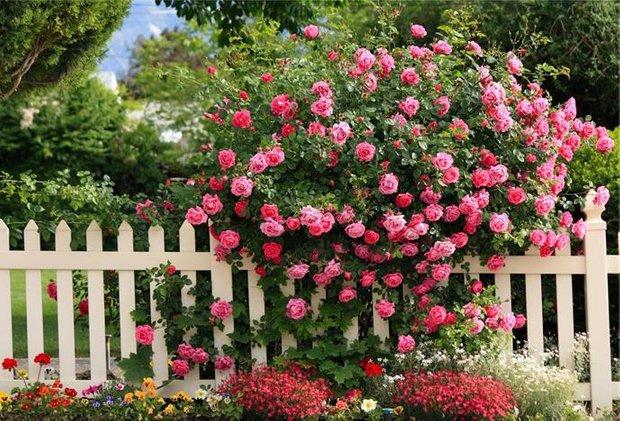 Фотография:  в стиле , Флористика, Советы, Цветы, кустарники – фото на INMYROOM