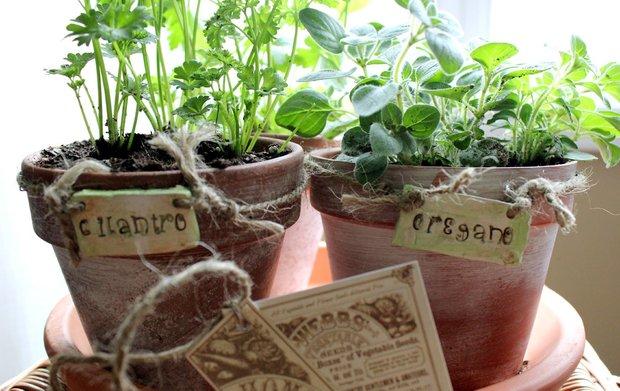 Фотография:  в стиле , Балкон, Советы, Зеленый, Оксана Шабалина, овощи на балконе, сад пряных трав на балконе, вертикальное озеленение, что выращивать в тени, огород на балконе, мини-огород на балконе – фото на INMYROOM