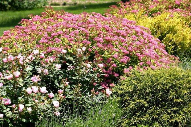 Фотография: Ландшафт в стиле , Советы, Derevo Park, как выбрать растения для сада, растения – фото на INMYROOM
