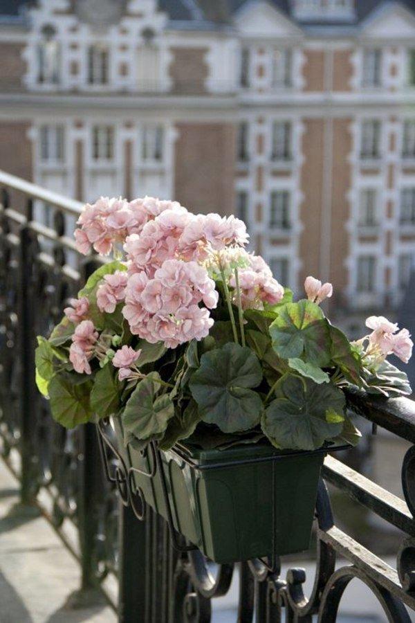 Фотография:  в стиле , Балкон, Советы, декор балкона, как украсить балкон цветами, цветы на балконе – фото на INMYROOM