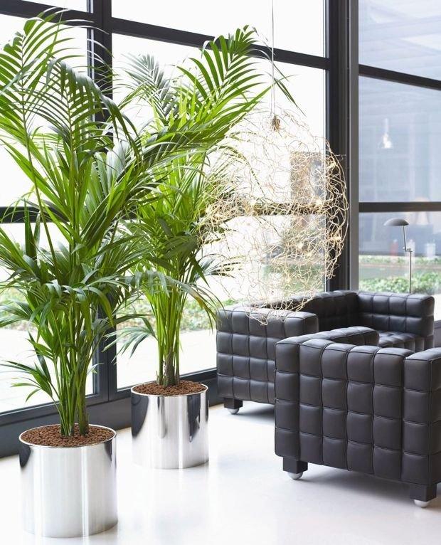 Фотография:  в стиле , Декор интерьера, Квартира, Дом, Флористика – фото на INMYROOM