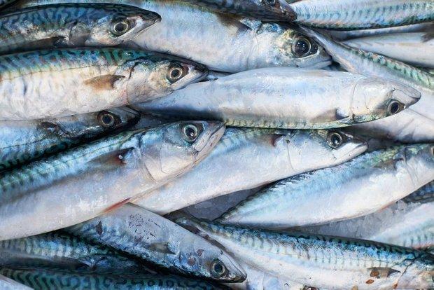 Фотография:  в стиле , Советы, Обзоры, Рыба, Скумбрия – фото на INMYROOM