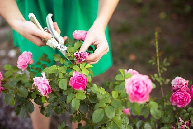 Фотография:  в стиле , Советы, Сад, работы в саду – фото на INMYROOM