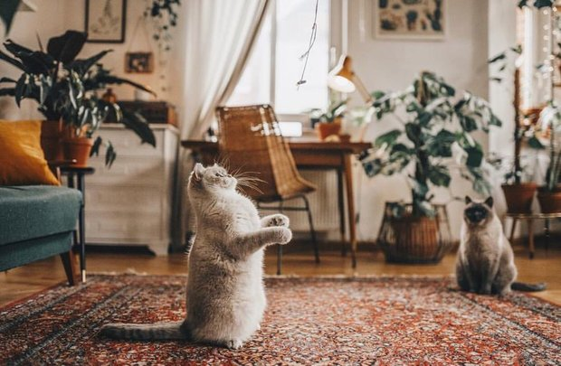 Фотография: Гостиная в стиле Классический, Современный, Советы, животные дома, Thomas, пылесос для животных, как избавиться от грязи и шерсти, как убрать квартиру от шерсти – фото на INMYROOM