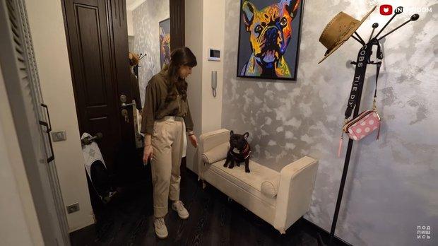 Фотография:  в стиле , Советы, домашние животные, кошка, собака – фото на INMYROOM