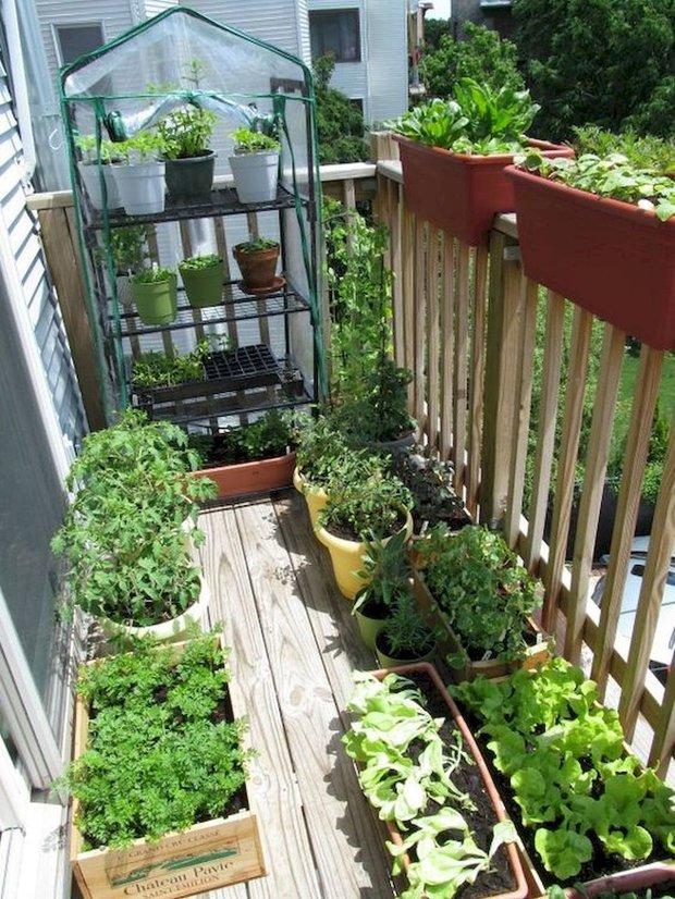 Фотография:  в стиле , Балкон, Квартира, Ландшафт, Дом и дача, огород на балконе, мини-огород на балконе, Leroy Merlin, Наталия Шушлебина – фото на INMYROOM