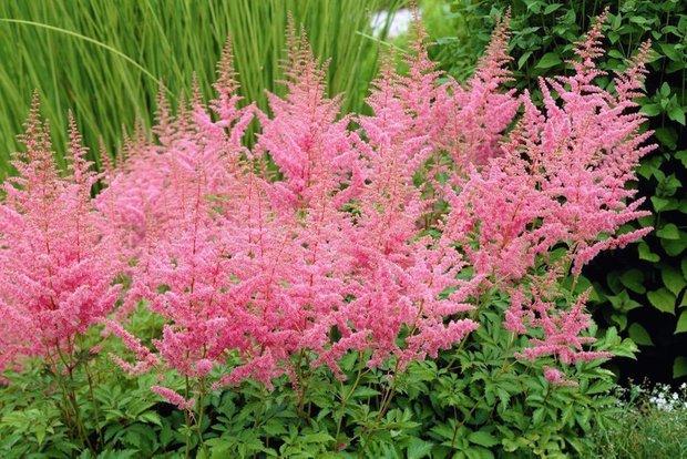 Фотография:  в стиле , Советы, Derevo Park, как выбрать растения для сада, растения – фото на INMYROOM