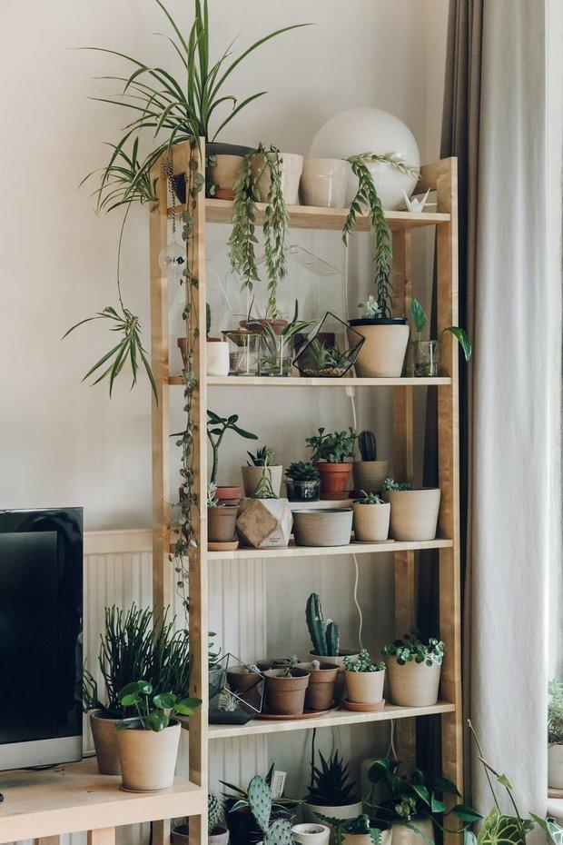 Фотография: Гостиная в стиле Скандинавский, Эко, Советы, здоровый микроклимат в квартире – фото на INMYROOM