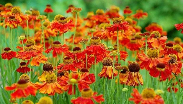 Фотография: Флористика в стиле , Ландшафт, Стиль жизни, Сад – фото на INMYROOM