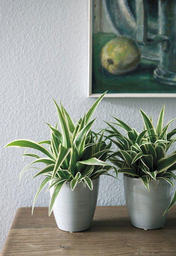 Фотография: Флористика в стиле , Декор интерьера, Советы, растения для ленивых, растения для интерьера – фото на INMYROOM