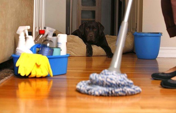 Фотография:  в стиле , Советы, кухня, Чистота на кухне – фото на INMYROOM