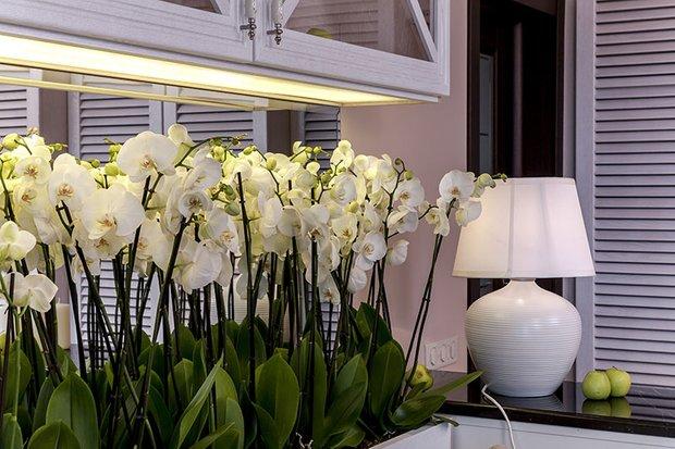 Фотография: Флористика в стиле , Гостиная, Декор интерьера, Интерьер комнат – фото на INMYROOM