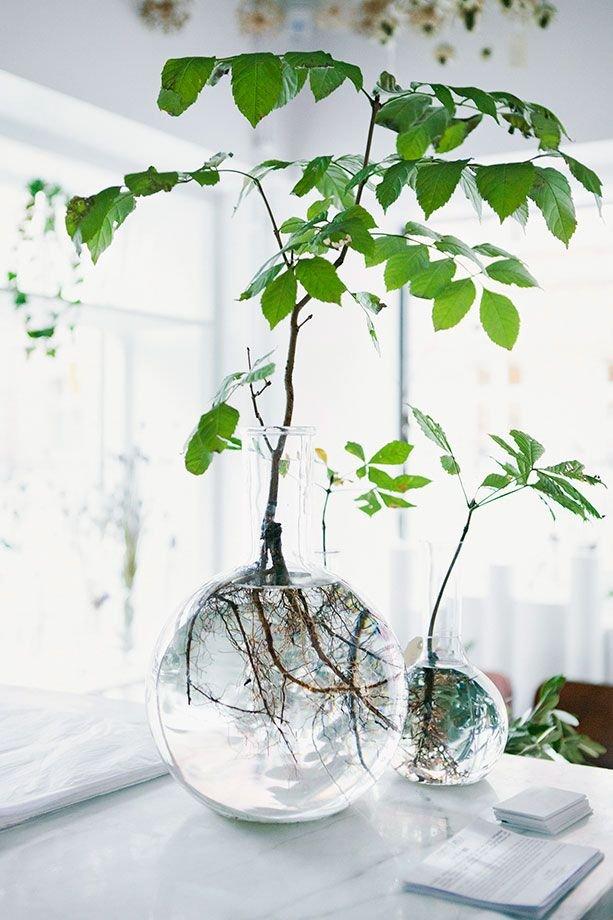 Фотография: Прочее в стиле , Малогабаритная квартира, Квартира, Флористика, Стиль жизни, Зимний сад – фото на INMYROOM