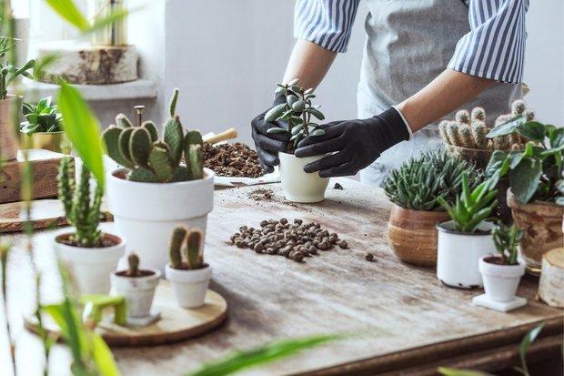 Фотография:  в стиле , Декор интерьера, Советы, растения для ленивых, растения для интерьера – фото на INMYROOM