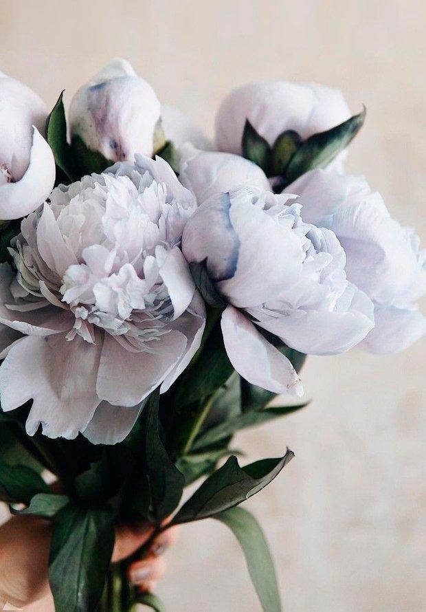 Фотография: Флористика в стиле , Советы, неизвестные факты, пионы, плетистые розы, сирень, удивительные факты – фото на INMYROOM