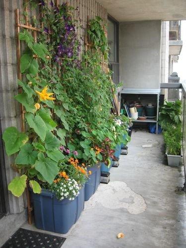 Фотография: Балкон в стиле Прованс и Кантри, Флористика, Стиль жизни – фото на INMYROOM