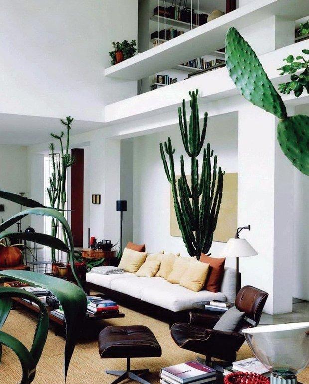 Фотография:  в стиле Современный, Декор интерьера, Зеленый, растения в горшках в интерьере, комнатные растения для ванной комнаты – фото на INMYROOM