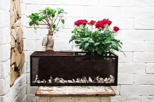 Фотография: Флористика в стиле , Декор интерьера, Советы, растения в интерьере, Vibe Life Technologies – фото на INMYROOM