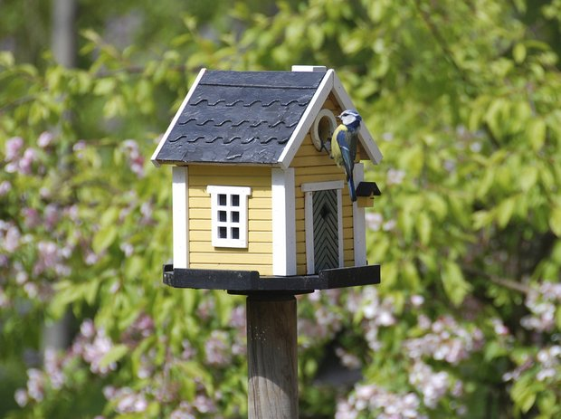 Фотография:  в стиле , Ландшафт, Советы, Дом и дача – фото на INMYROOM