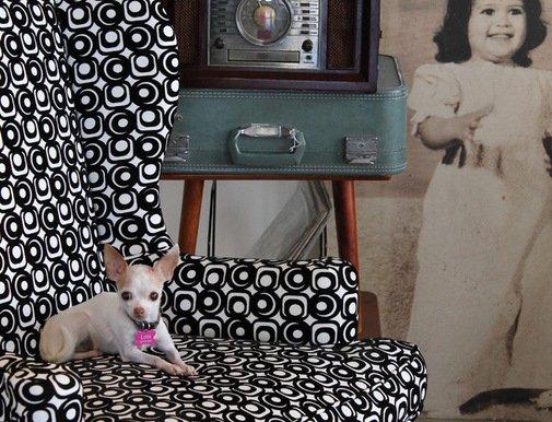 Фотография: Прочее в стиле , Декор интерьера, Мебель и свет, Декор дома, Кресло – фото на INMYROOM