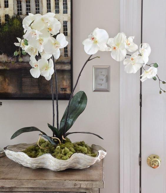 Фотография: Кухня и столовая в стиле Скандинавский, Гид, растения в интерьере – фото на INMYROOM