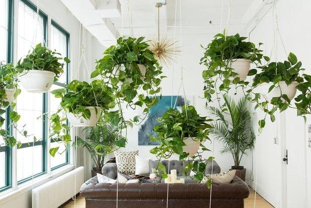 Фотография: Гостиная в стиле Эко, Декор интерьера, Советы, растения для ленивых, растения для интерьера – фото на INMYROOM