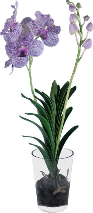 Декор Vanda Orchid