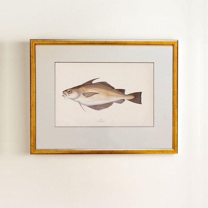 Golden fish 0.3