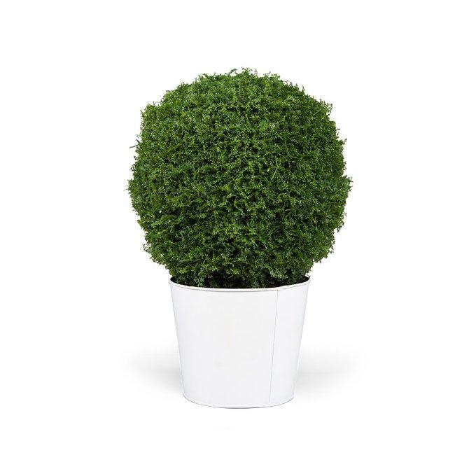 Растение Een Wondepot Н56