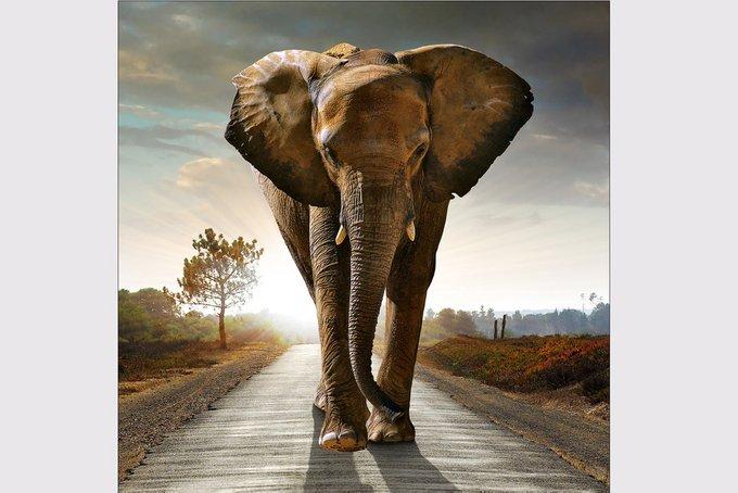 PRO-Art Репродукция   Glas Art Elephant
